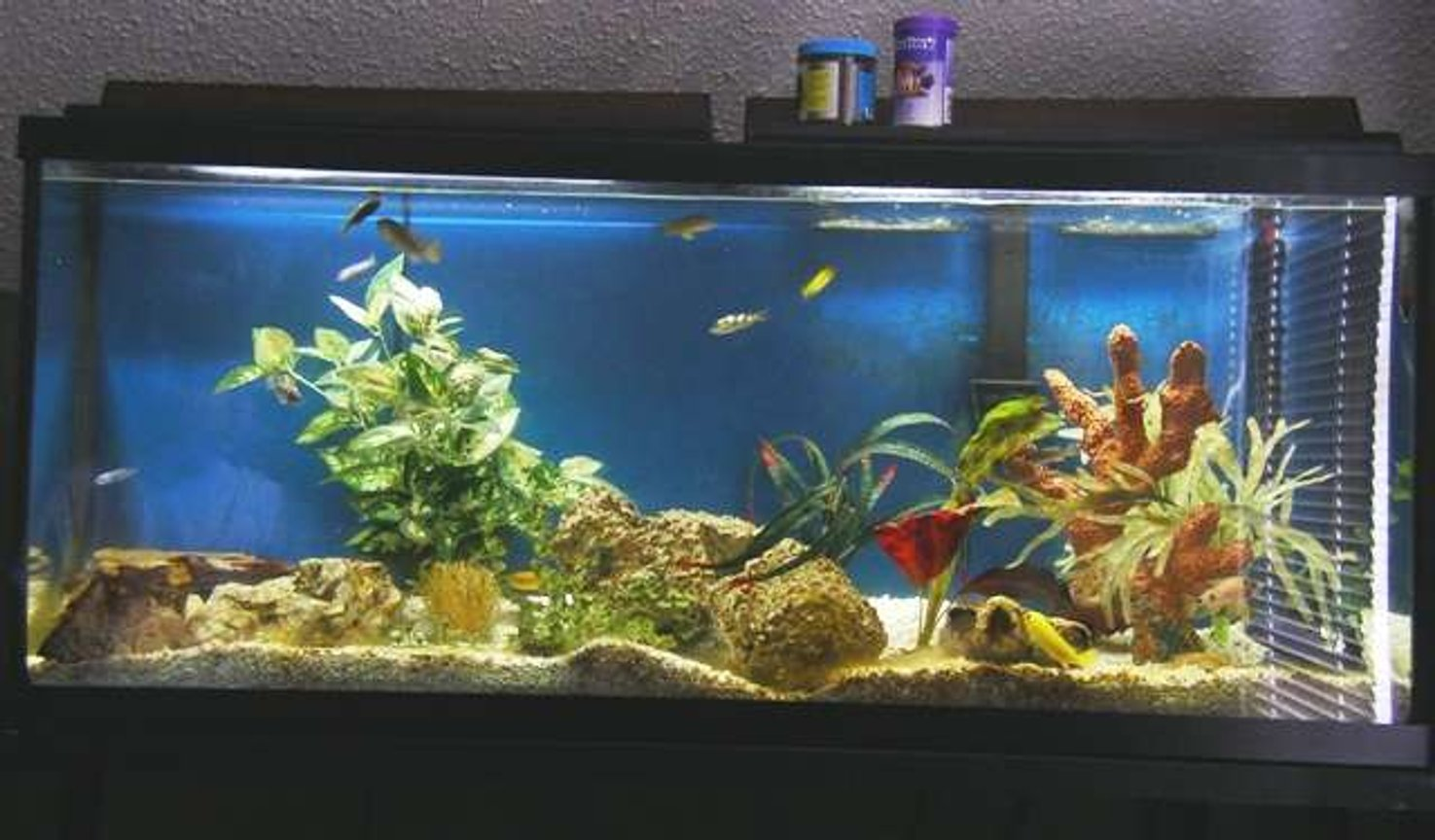 55 gallons freshwater fish tank (mostly fish and non-living decorations) - pic of my african fish tank