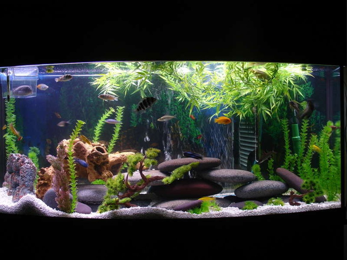 72 gallons freshwater fish tank (mostly fish and non-living decorations) - whole tank view