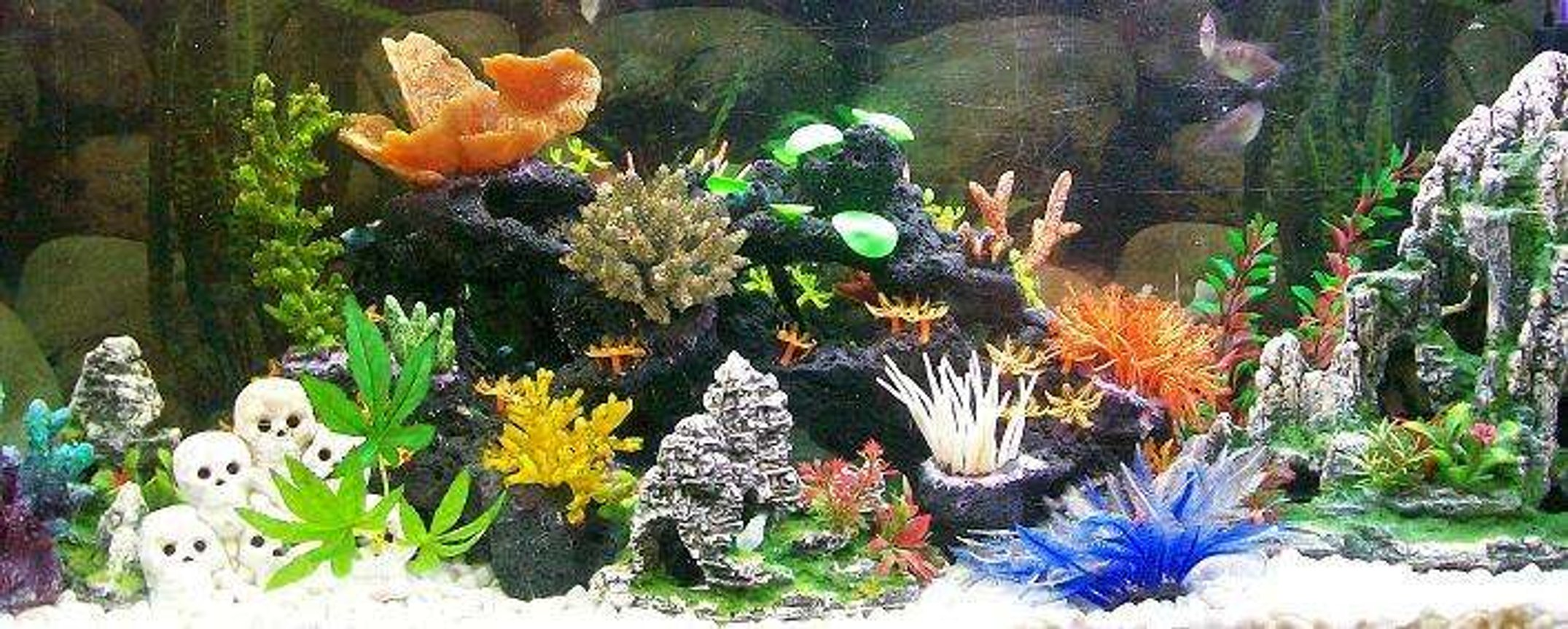 freshwater fish tank (mostly fish and non-living decorations) - ..Fake Neon Reef.. Tropical Freshwater..