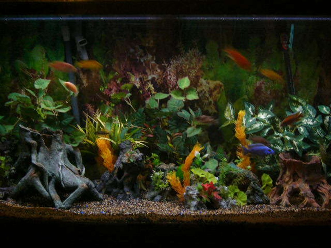 80 gallons freshwater fish tank (mostly fish and non-living decorations) - my tank