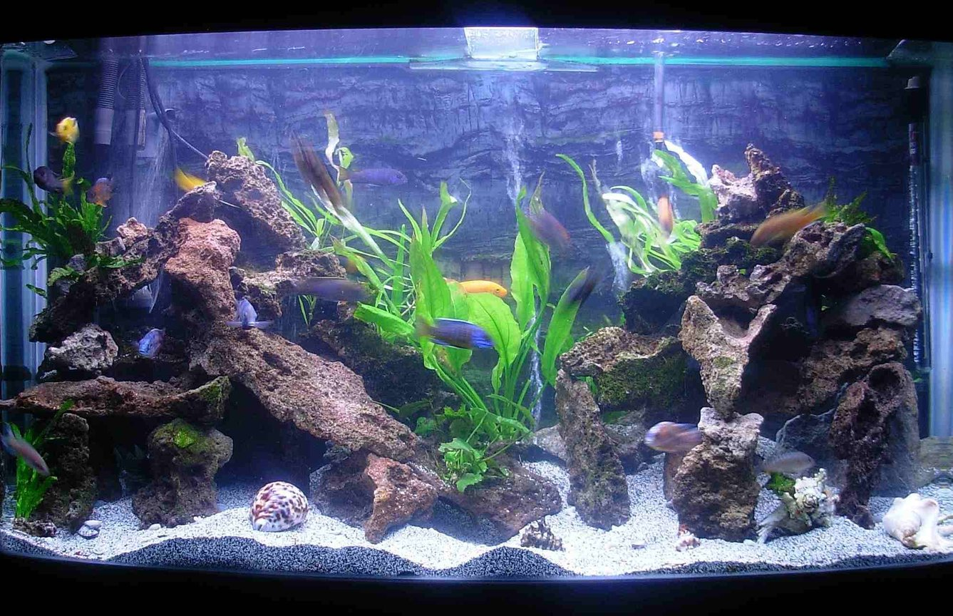 90 gallons freshwater fish tank (mostly fish and non-living decorations) - I Changed my tank around and added lots of live plants. 90 Gallon bowfront