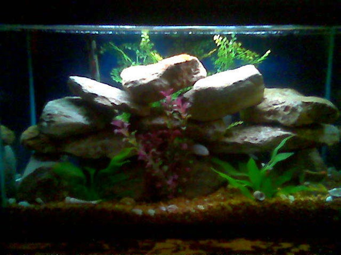 29 gallons freshwater fish tank (mostly fish and non-living decorations) - This is my 29 gal ciclid tank.