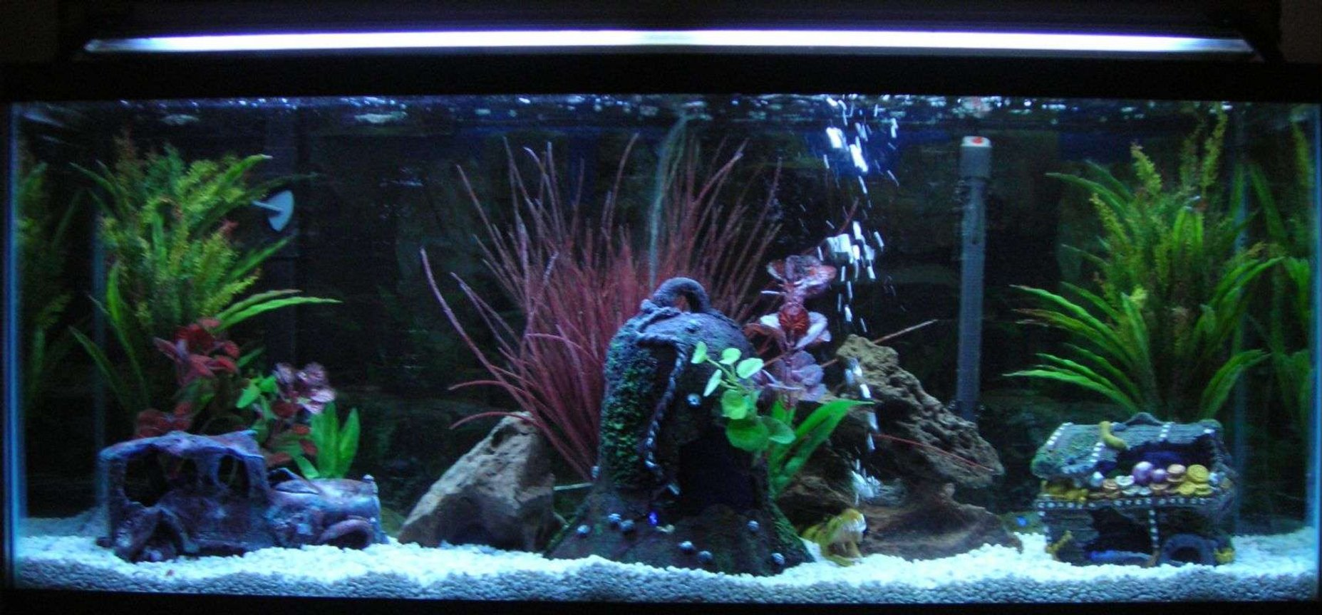 55 gallons freshwater fish tank (mostly fish and non-living decorations) - my new design