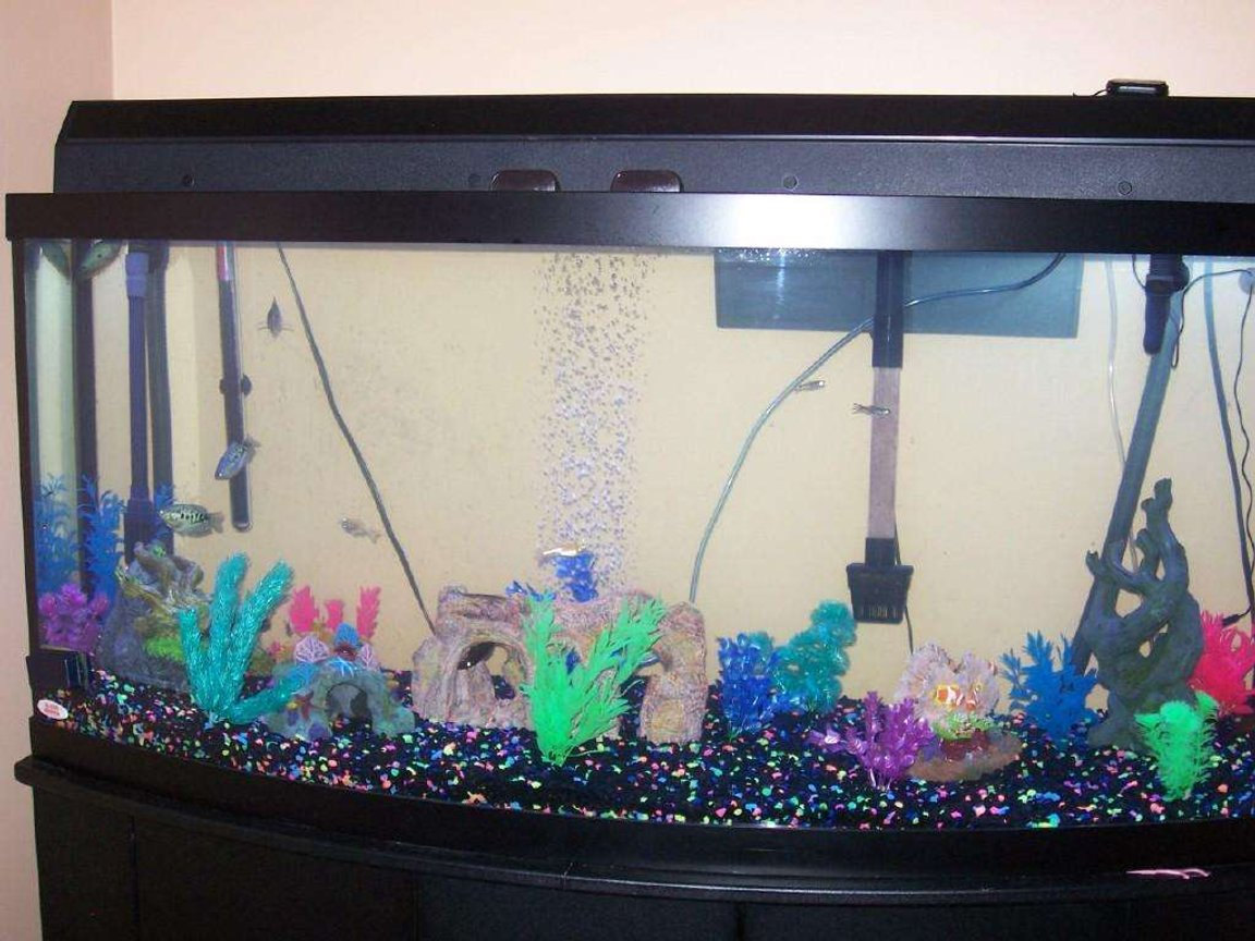 72 gallons freshwater fish tank (mostly fish and non-living decorations) - this is my tank