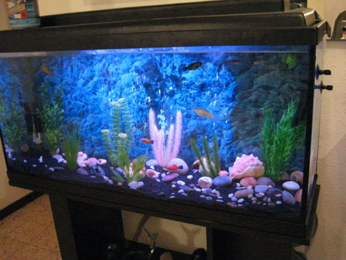 40 gallons freshwater fish tank (mostly fish and non-living decorations) - NewCycling Tank
