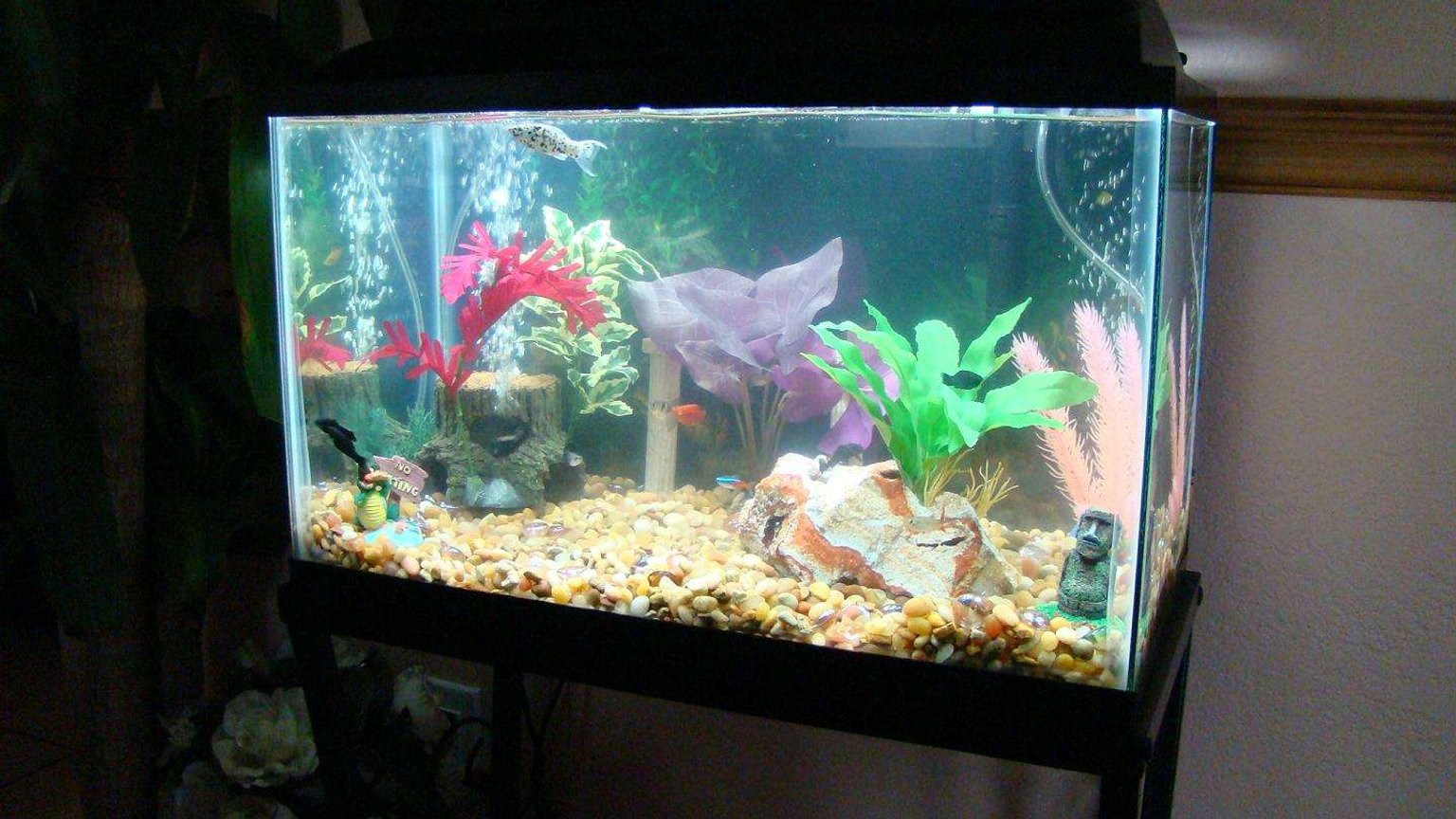 10 gallons freshwater fish tank (mostly fish and non-living decorations) - angle view