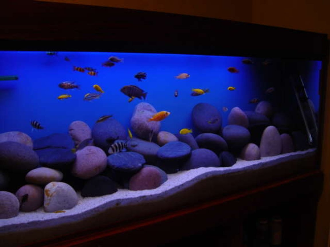 1892 gallons freshwater fish tank (mostly fish and non-living decorations) - my tank