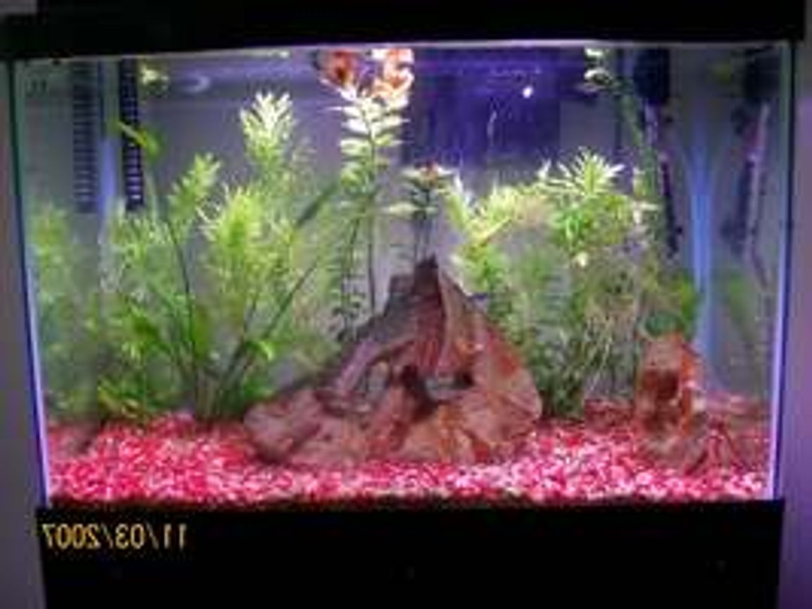 20 gallons freshwater fish tank (mostly fish and non-living decorations) - My 20 gallon freshwater tank