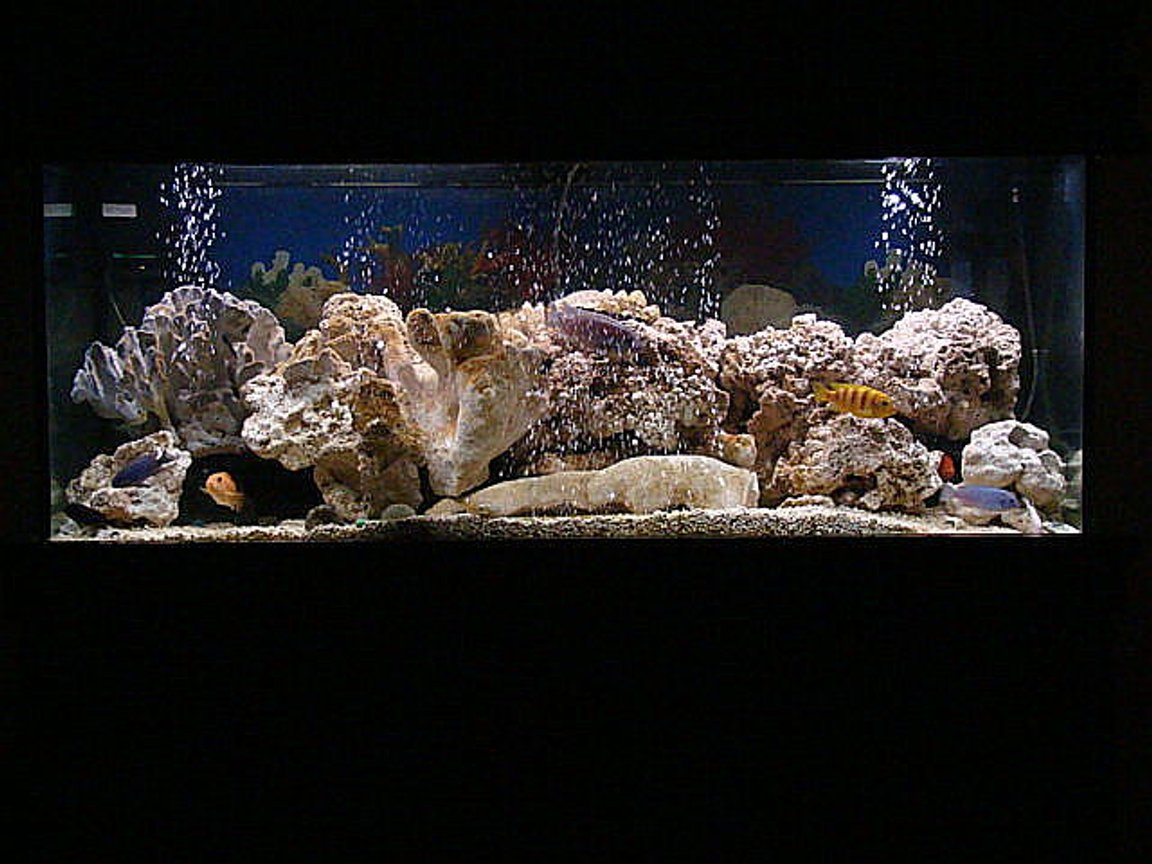 75 gallons freshwater fish tank (mostly fish and non-living decorations) - revamped