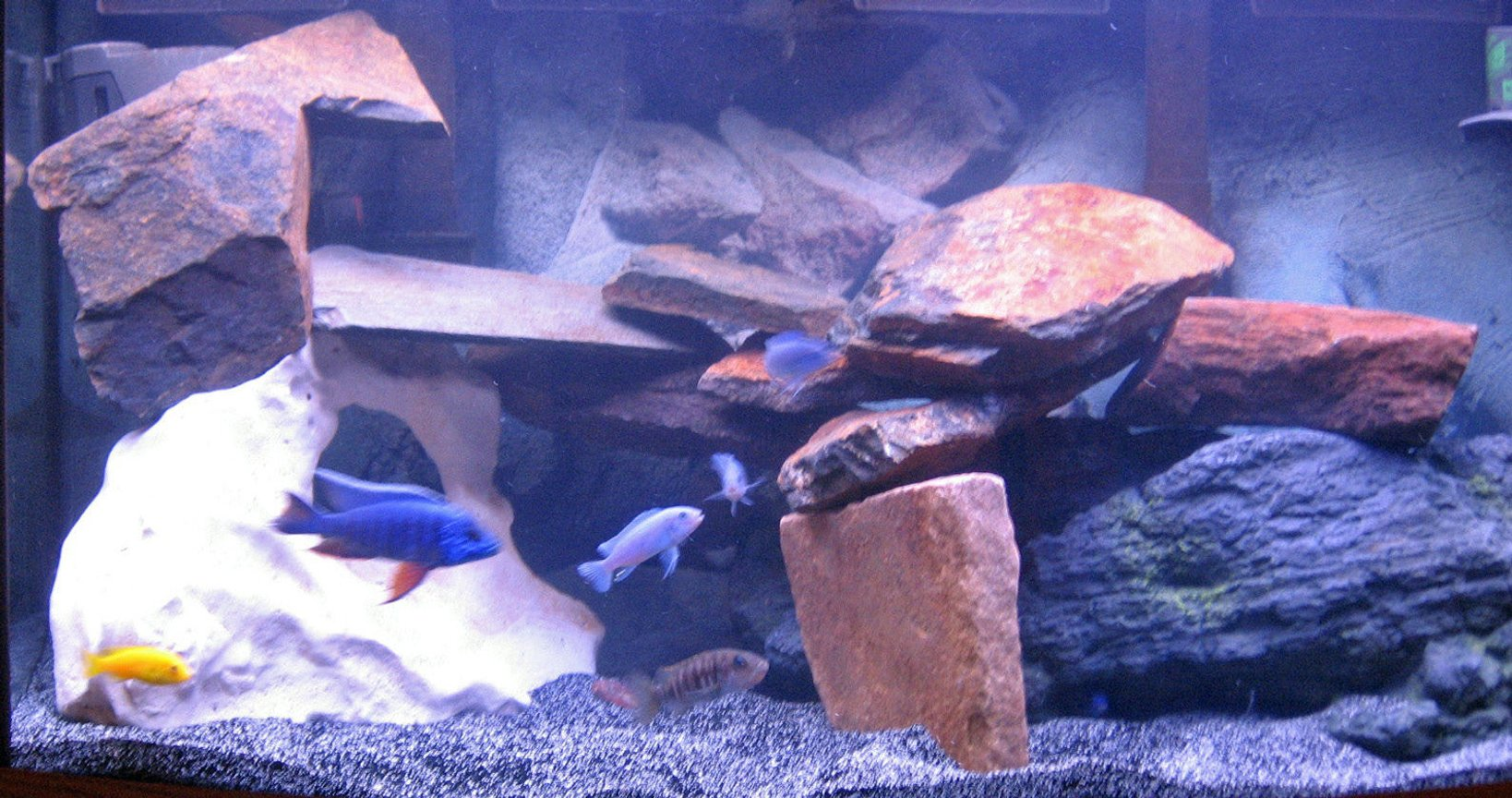 46 gallons freshwater fish tank (mostly fish and non-living decorations) - mixed african 46 gallon bowfront