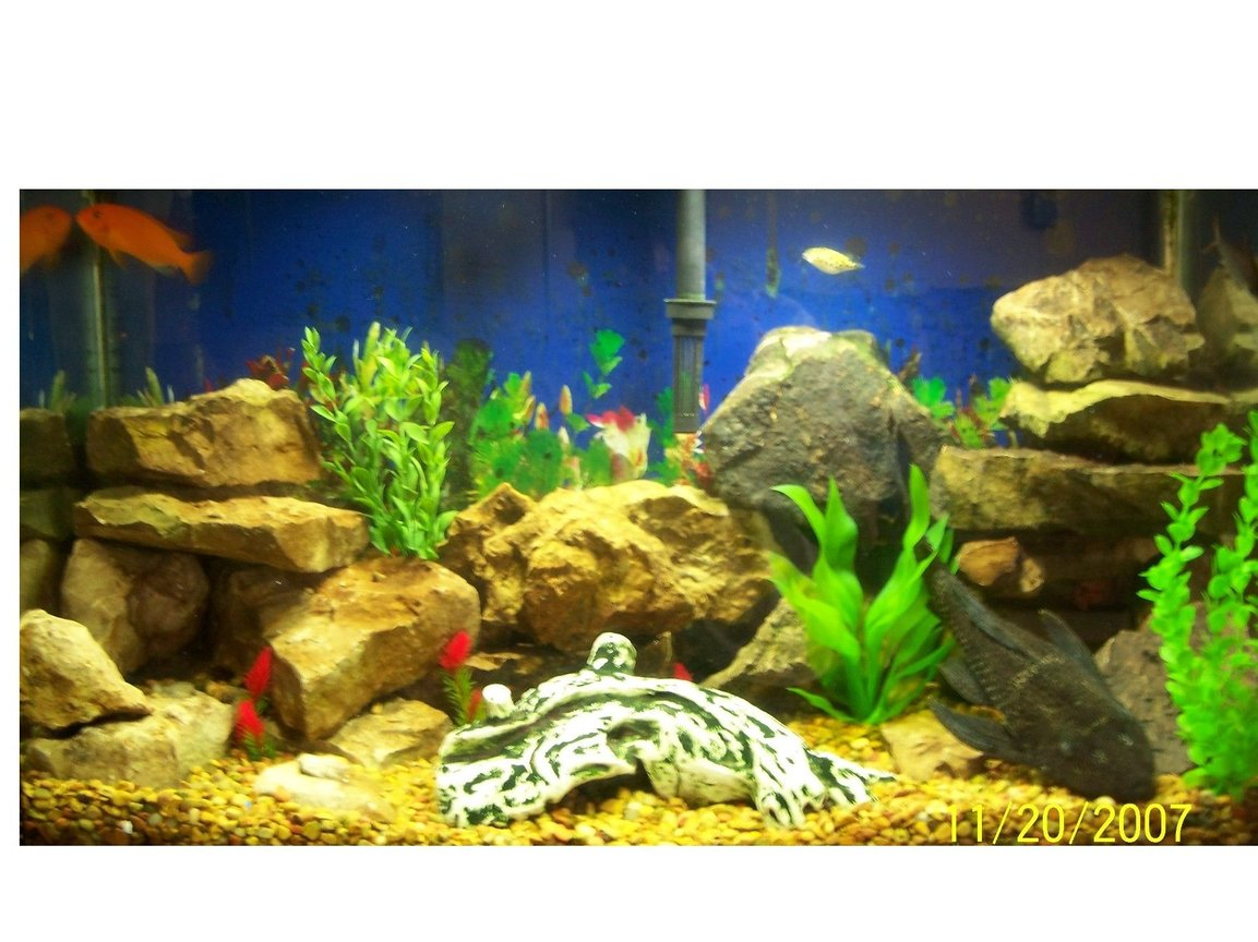 29 gallons freshwater fish tank (mostly fish and non-living decorations) - My fish Tank