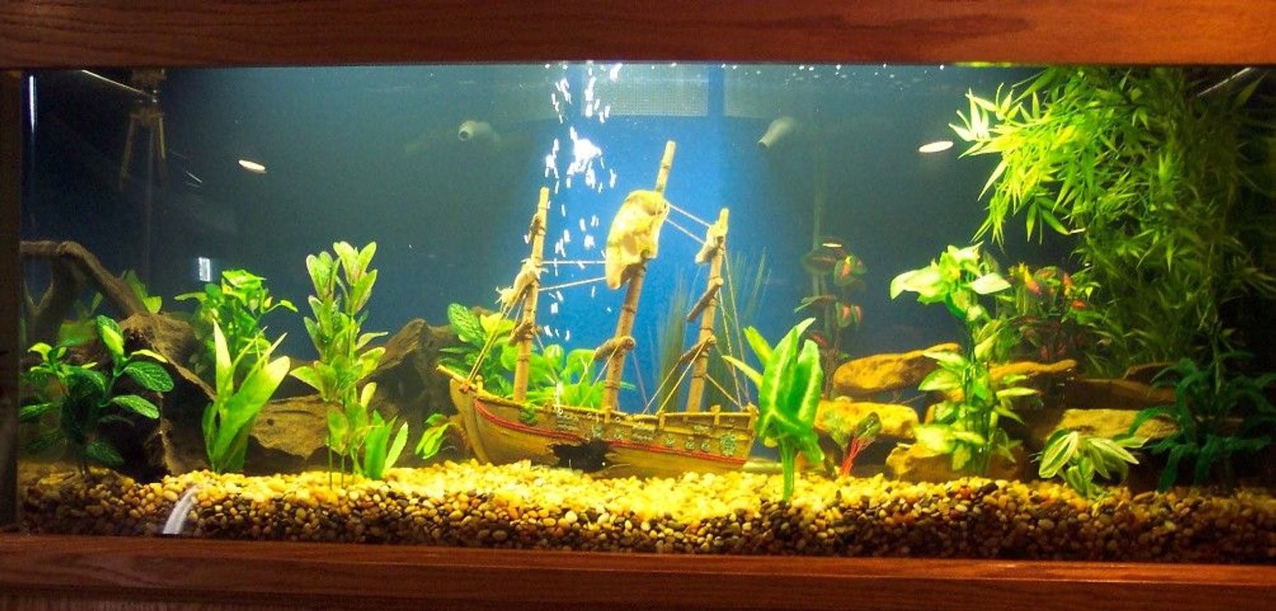 75 gallons freshwater fish tank (mostly fish and non-living decorations) - Our new 75 gal. tank.