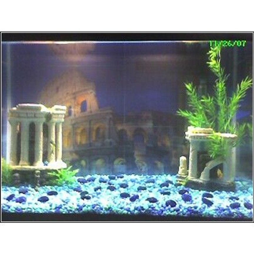 10 gallons freshwater fish tank (mostly fish and non-living decorations) - The Coliseum