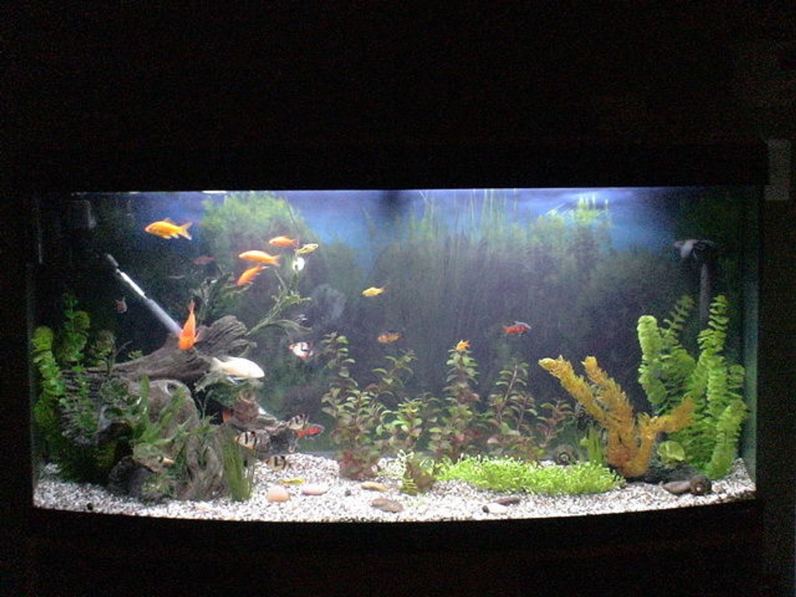 75 gallons freshwater fish tank (mostly fish and non-living decorations) - my 75 gal tank working progress