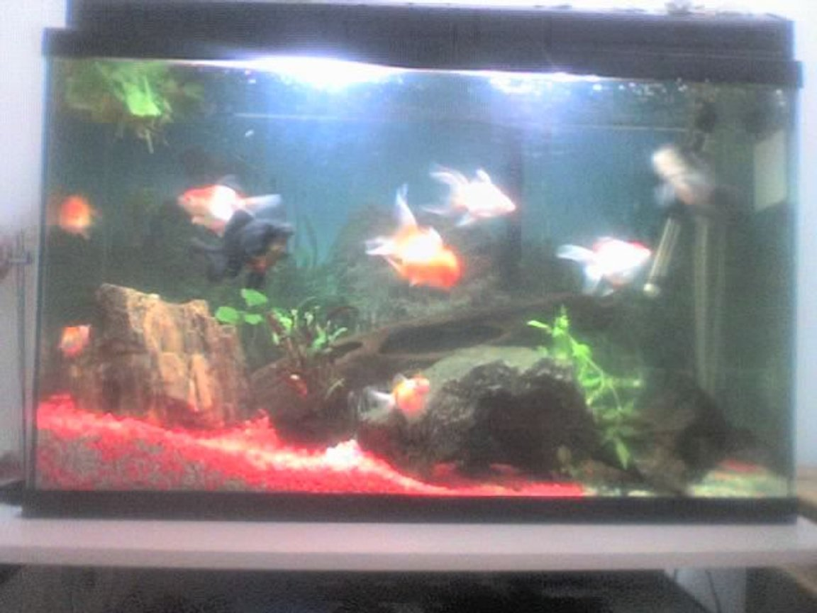 30 gallons freshwater fish tank (mostly fish and non-living decorations) - in the future i'll buy a better camera..this was taken by a 1.2mp phone camera..many thanks for stoping by