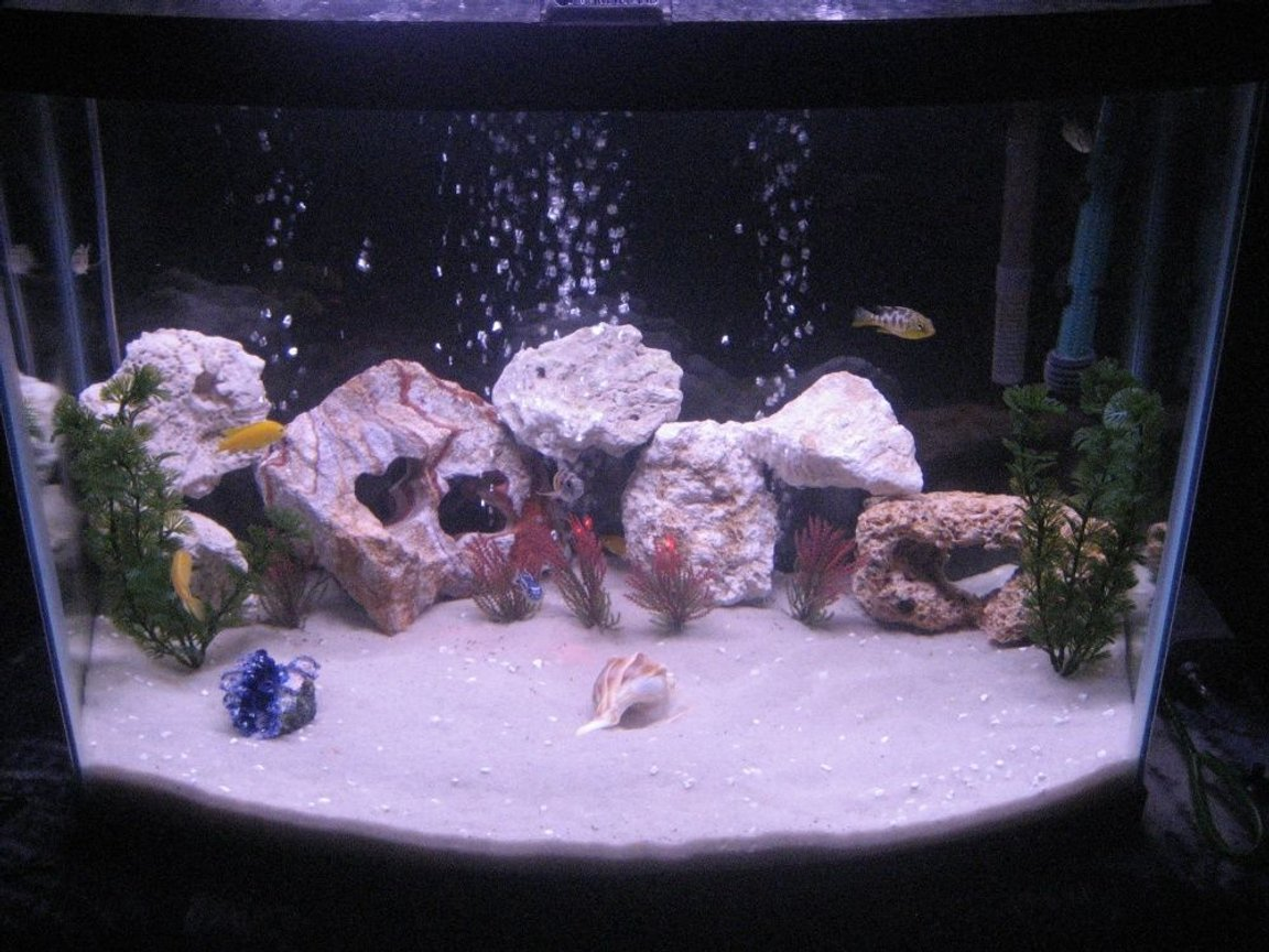 28 gallons freshwater fish tank (mostly fish and non-living decorations) - Here is another picture of our 28 gallon! We just added some fake plants..There are I think 8 African Chicilids! They are wonderful to have and are very rambunctious!
