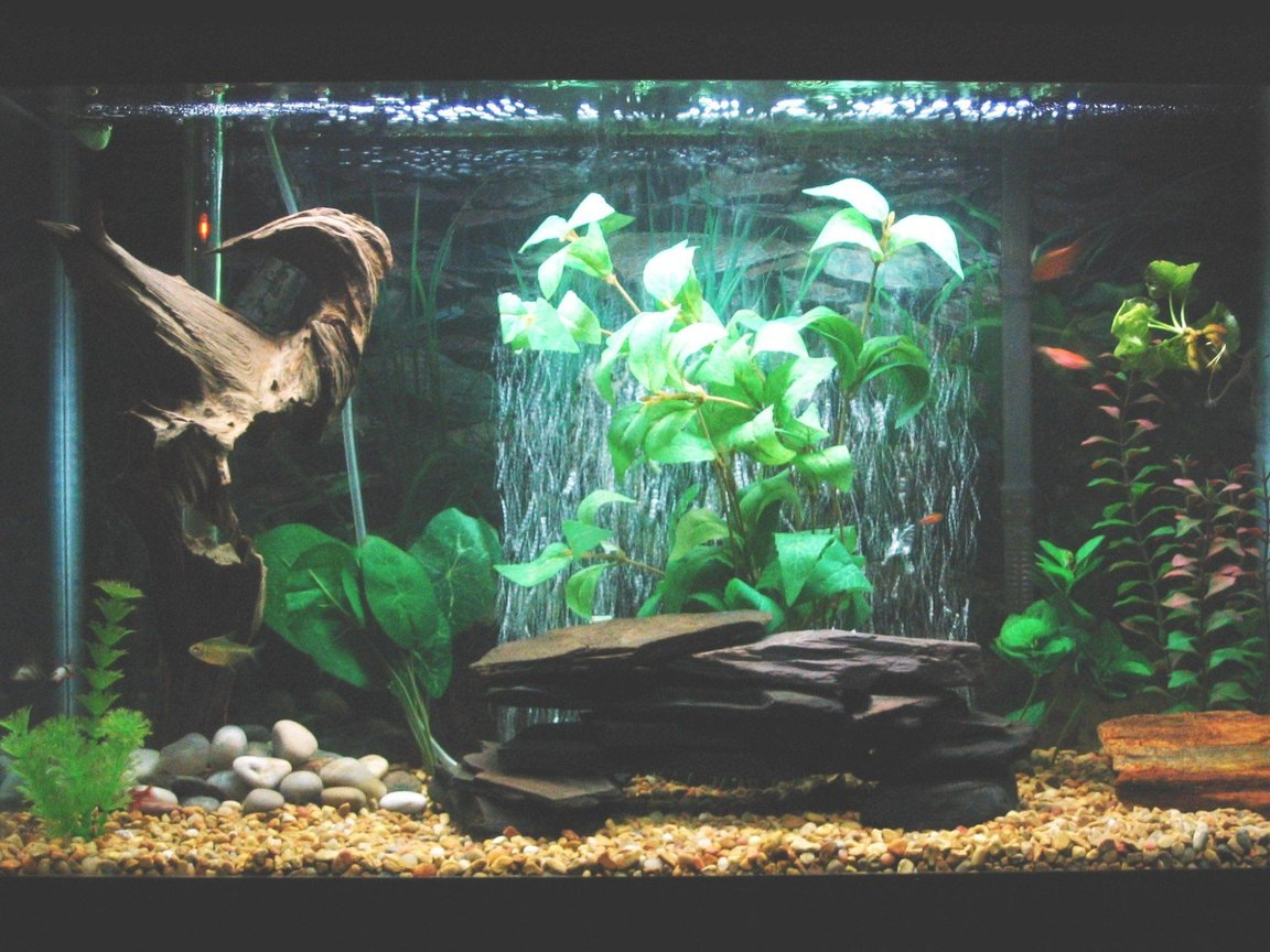29 gallons freshwater fish tank (mostly fish and non-living decorations) - 29 gallon community