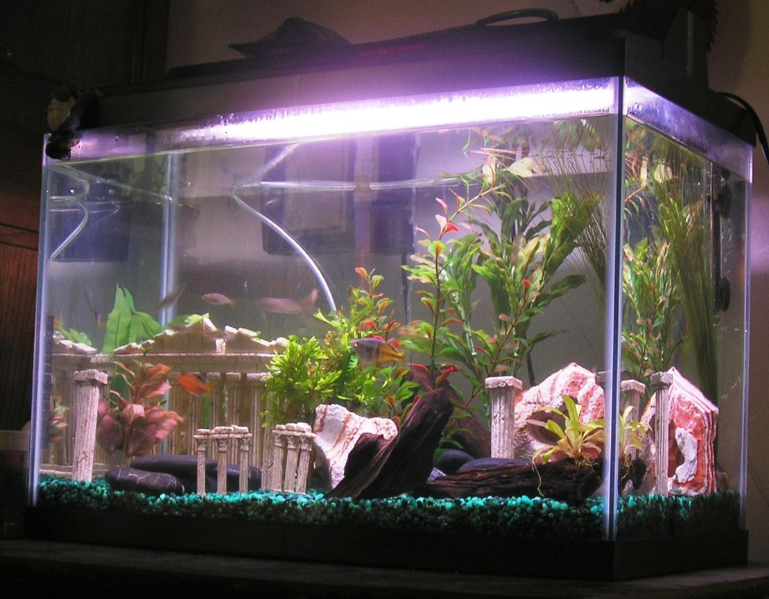 20 gallons freshwater fish tank (mostly fish and non-living decorations) - My 20 Gallon Tank (needing some water)