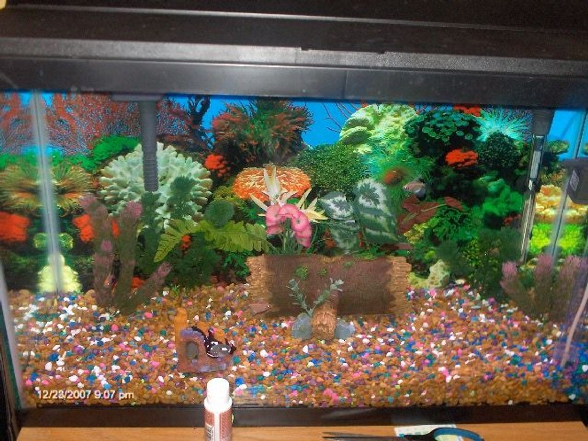30 gallons freshwater fish tank (mostly fish and non-living decorations) - my sons 1st fishtank