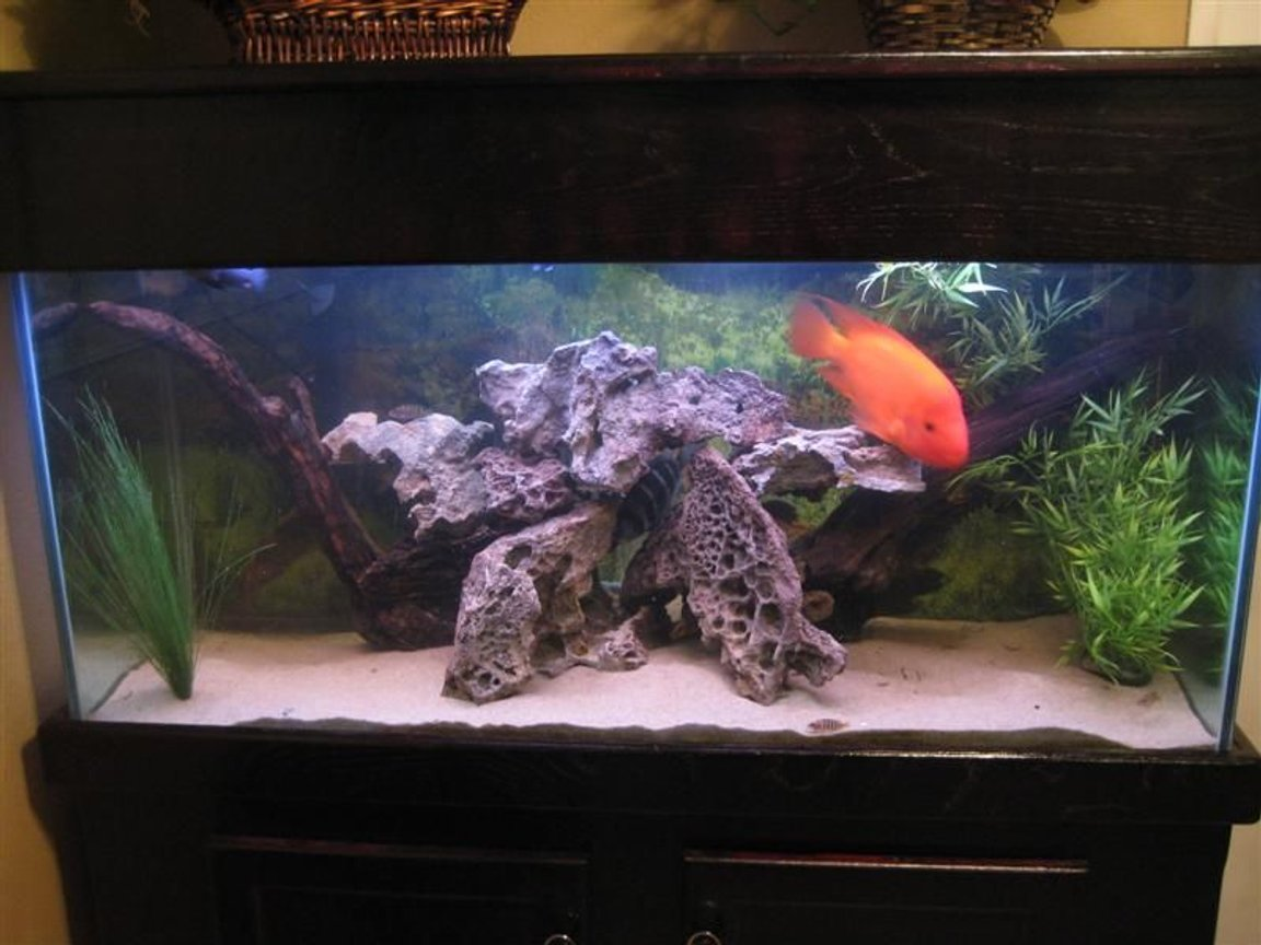 90 gallons freshwater fish tank (mostly fish and non-living decorations) - 90 gallon Tank. It's work in progress.