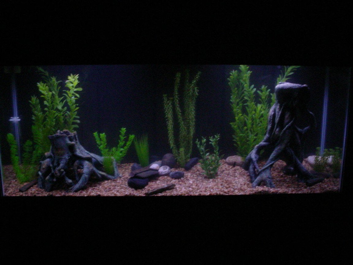 freshwater fish tank (mostly fish and non-living decorations) - new 55gallon aquarium, many fake plants and some root ornaments and river rocks. sorry about the darkness of the picture.