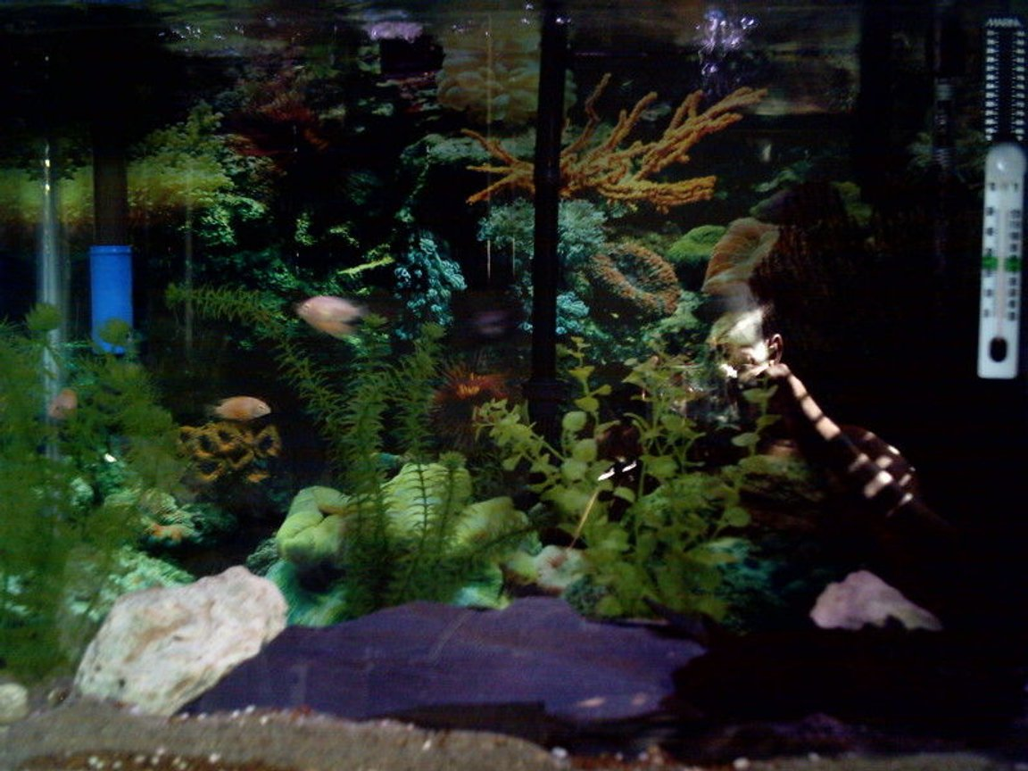 37 gallons freshwater fish tank (mostly fish and non-living decorations) - Trying my best.