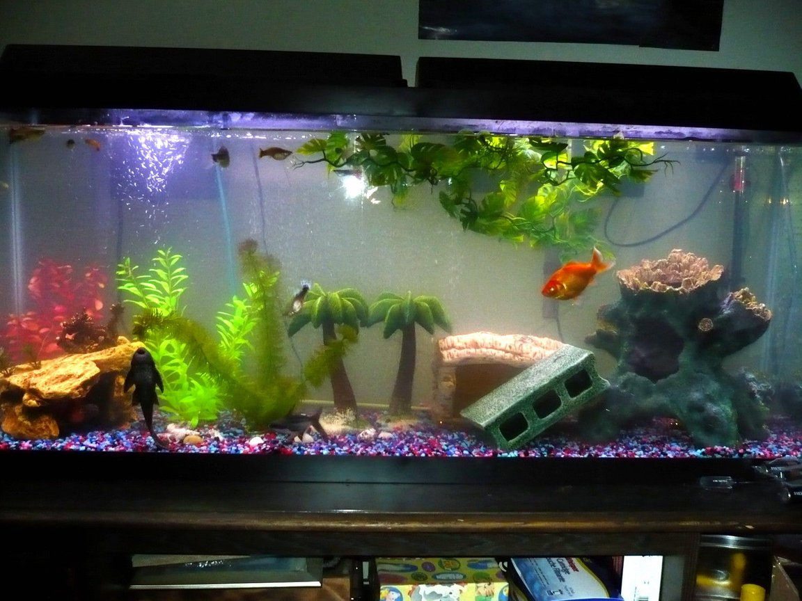 55 gallons freshwater fish tank (mostly fish and non-living decorations) - 55gal community tank.