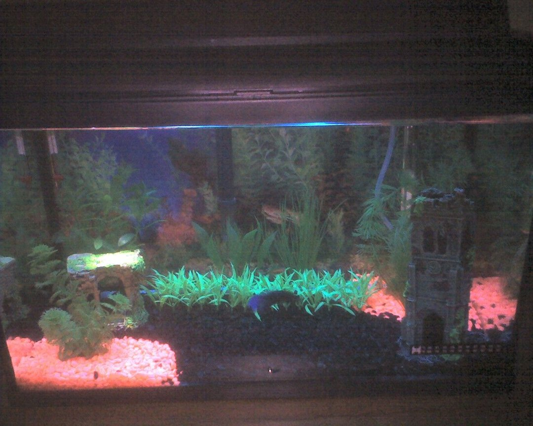 10 gallons freshwater fish tank (mostly fish and non-living decorations) - My first attempt at my 10 Gal