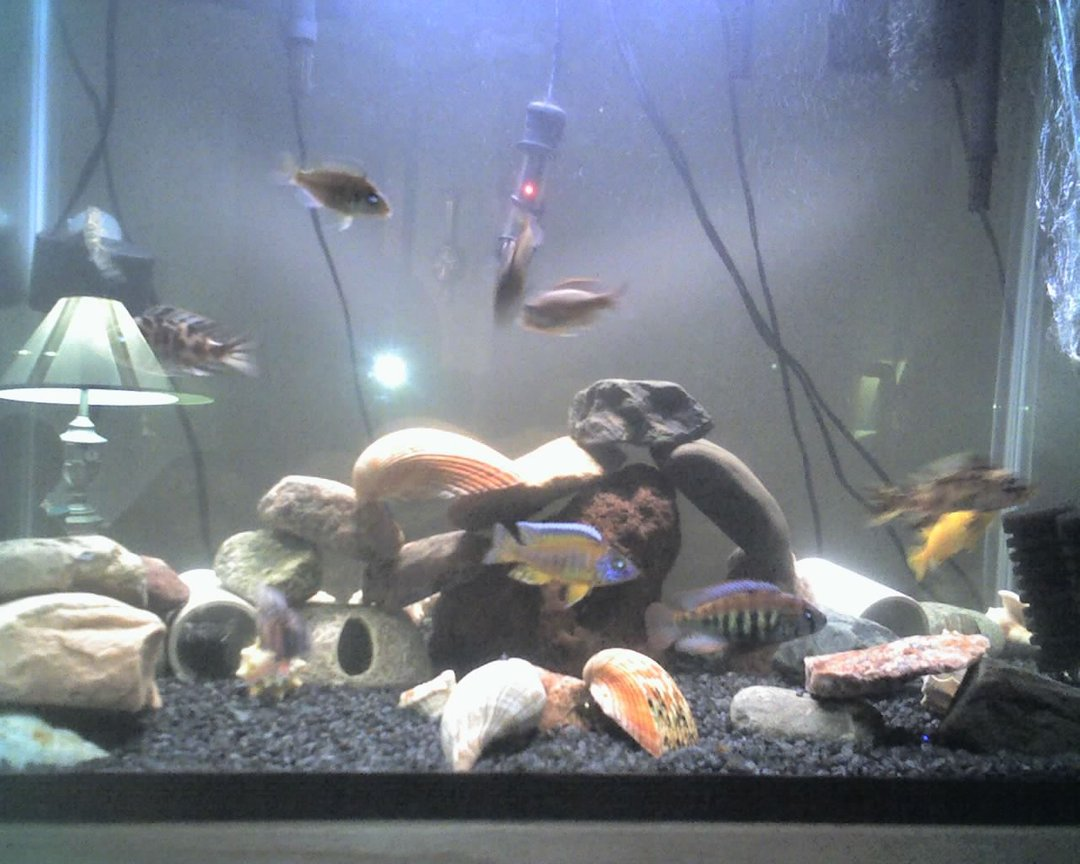 60 gallons freshwater fish tank (mostly fish and non-living decorations) - my tank