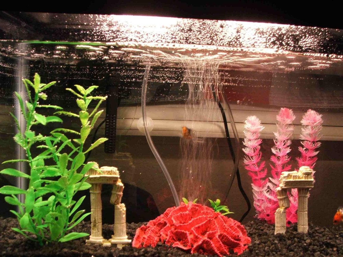 40 gallons freshwater fish tank (mostly fish and non-living decorations) - My Soon To be wives gold fish tank i set up for her. Dirty Dirty Fish..lol
