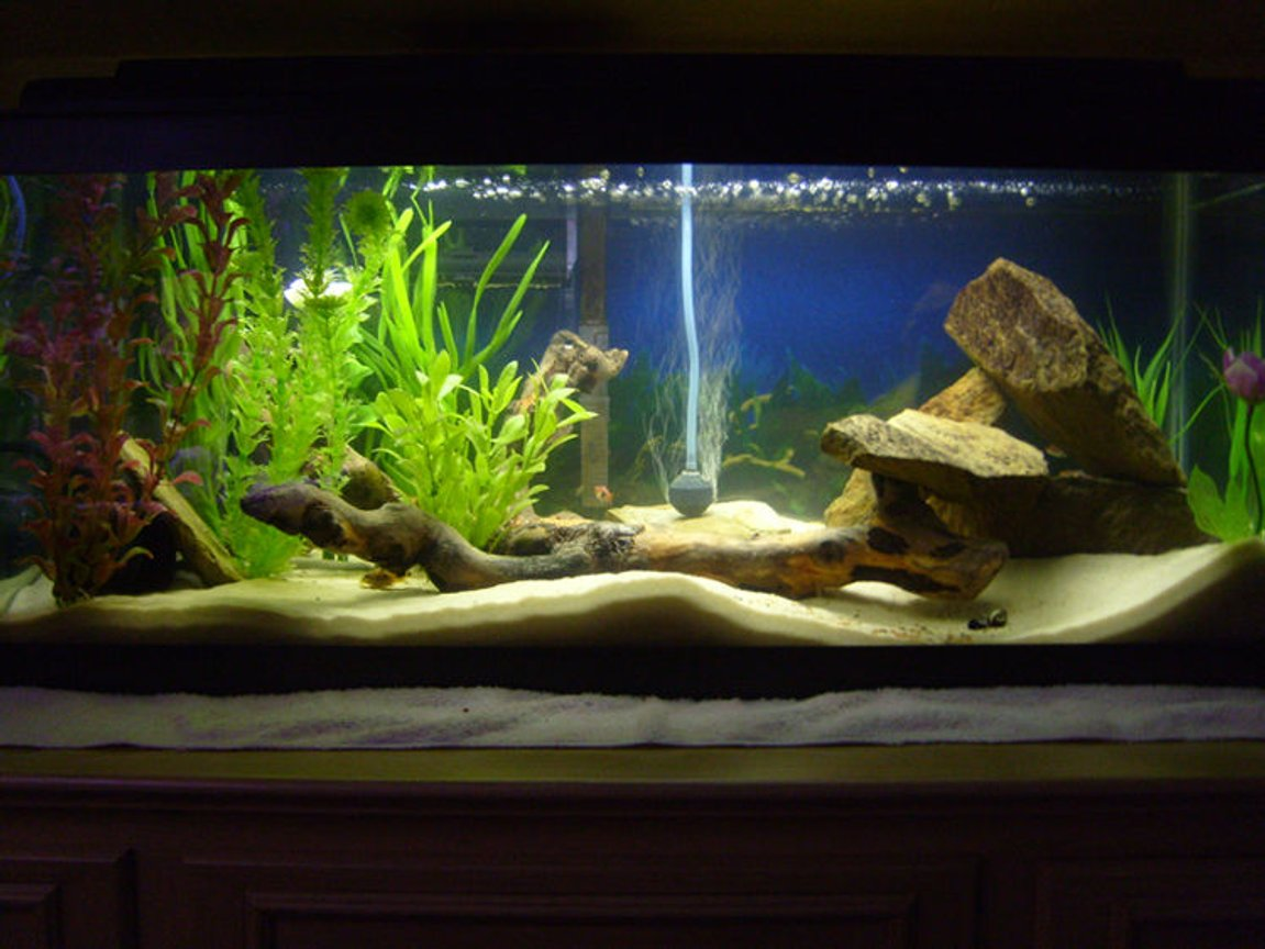 freshwater fish tank (mostly fish and non-living decorations) - 20g long Tropical Tank -30lbs Play-Sand -Whisper Power Filter 30 -Bogwood driftwood -Numerous shale rocks -Black PVC pipe -Several fake plants -Marineland Visi-Therm Stealth Submersible Heater -Perfect-a-Light 20 Watt Fluorescent Occupants -2 German Blue Rams -2 Khuli Loaches -Clown Pleco -6 Harlequin Rasbora -2 Oto Cats