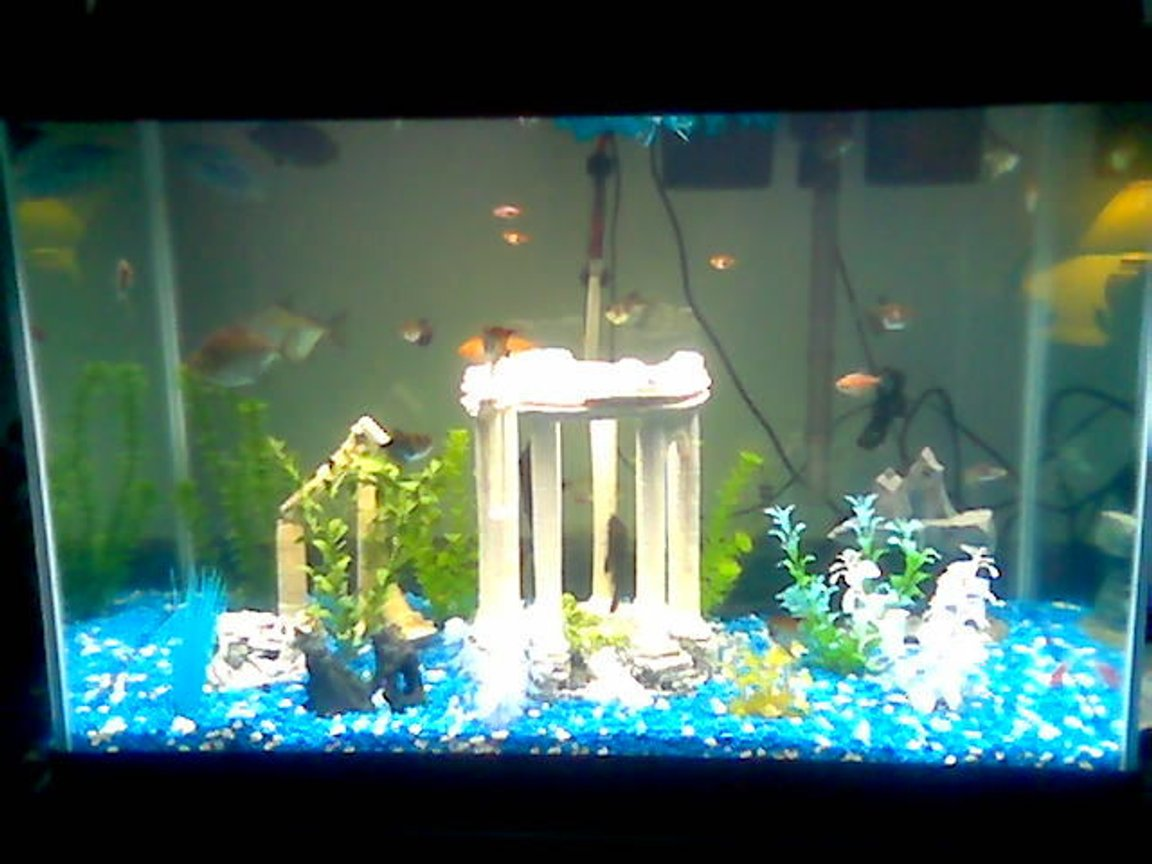 75 gallons freshwater fish tank (mostly fish and non-living decorations) - 65g