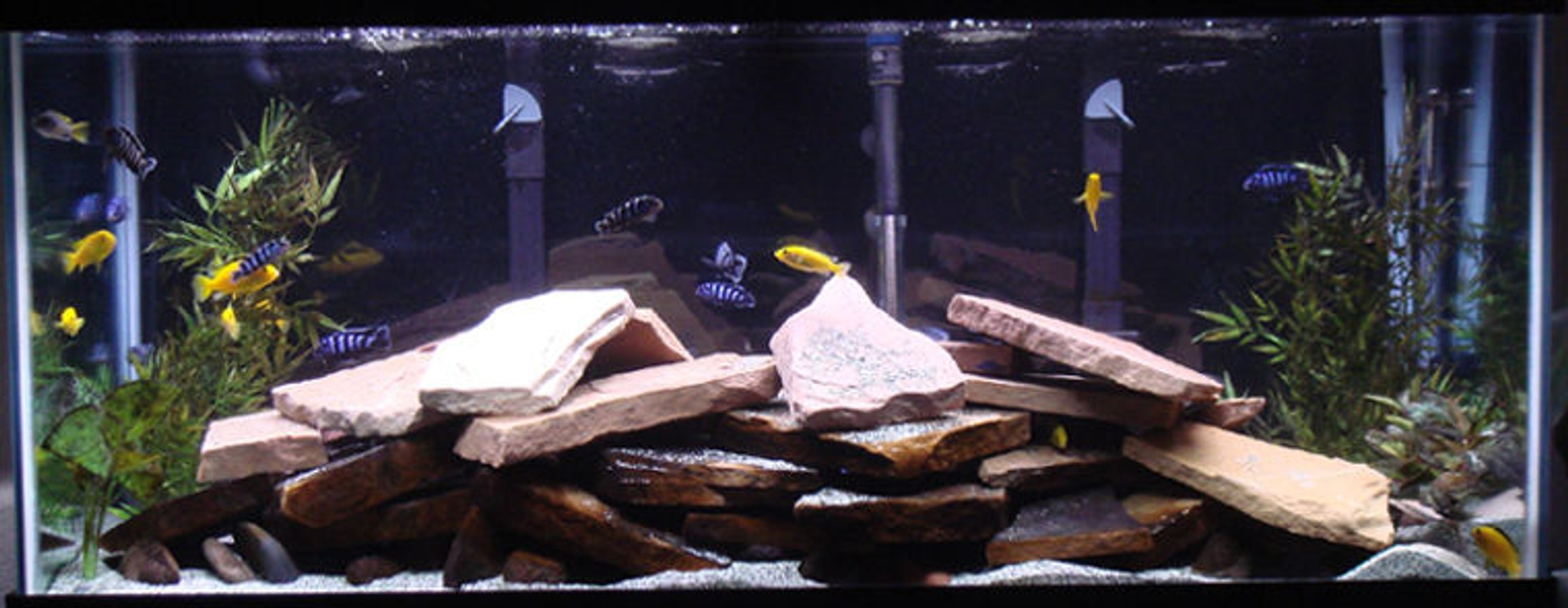 75 gallons freshwater fish tank (mostly fish and non-living decorations) - my 75 gallon mbuna tank