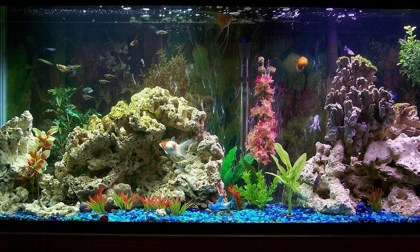 55 gallons freshwater fish tank (mostly fish and non-living decorations) - 55 gal freshwater community