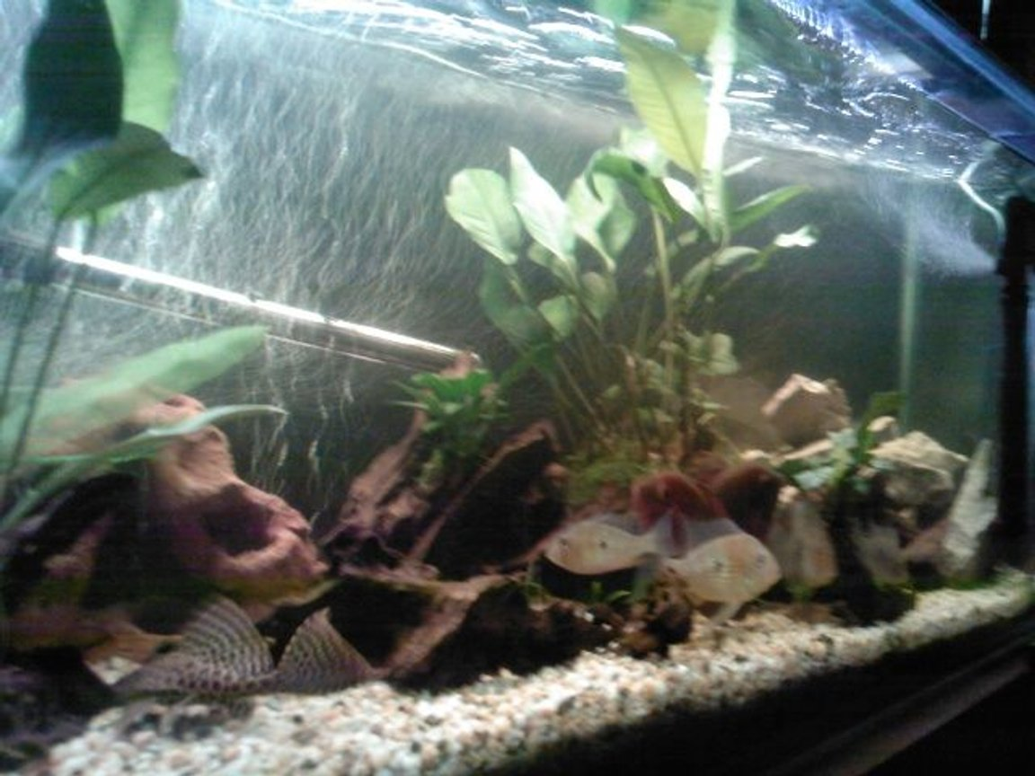 70 gallons freshwater fish tank (mostly fish and non-living decorations) - tank