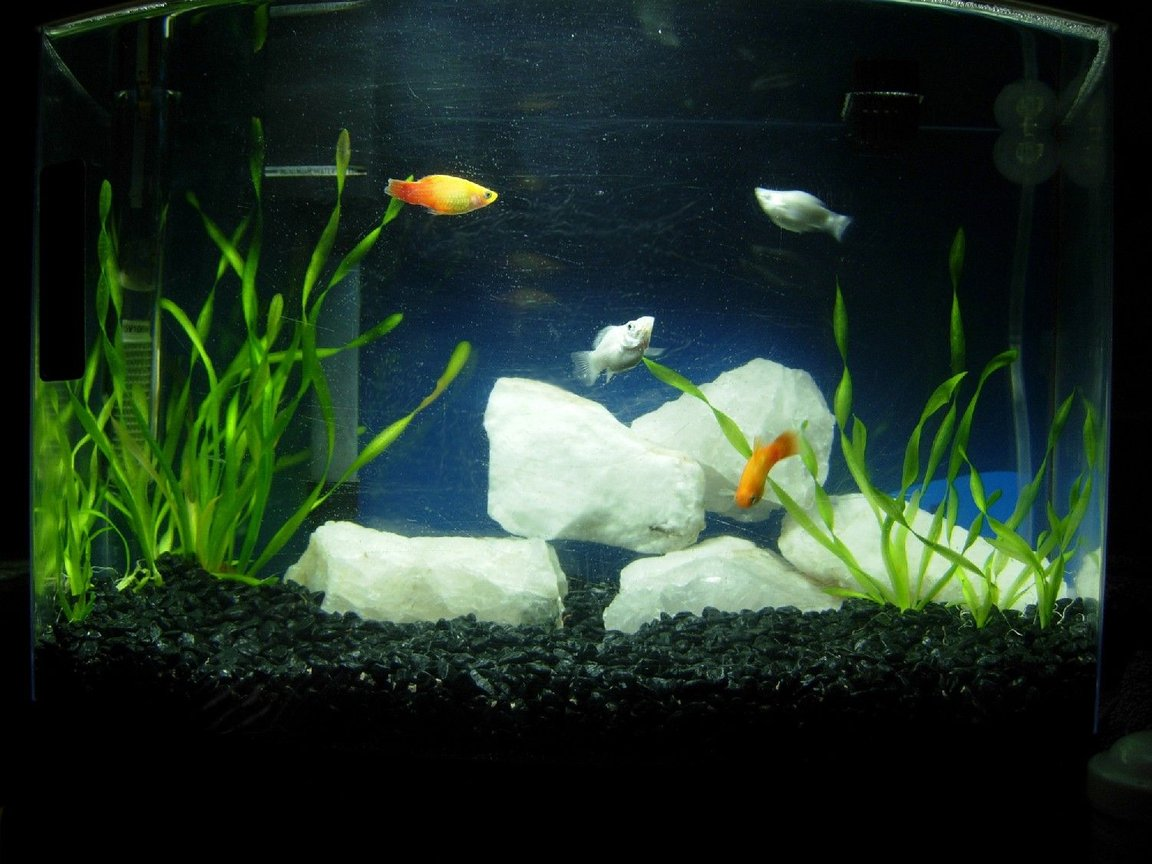 5 gallons freshwater fish tank (mostly fish and non-living decorations) - 5 gallon freshwater bowfront tank