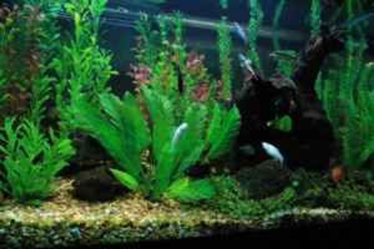 58 gallons freshwater fish tank (mostly fish and non-living decorations) - 58 Oceanic Freshwater Assorted fake plants Community tank designed on everybody has a job to do and a special look about them. Nothing too common