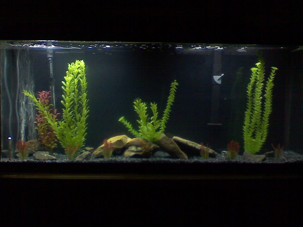 45 gallons freshwater fish tank (mostly fish and non-living decorations) - My 55 gal Oscar tank