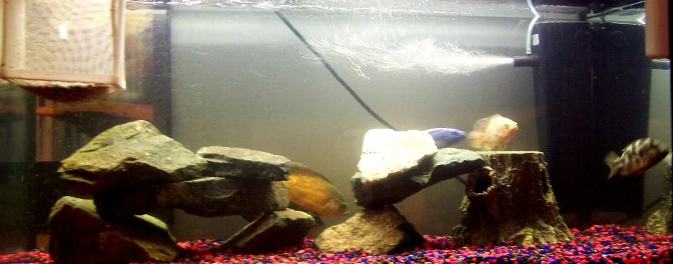 250 gallons freshwater fish tank (mostly fish and non-living decorations) - Tank =)