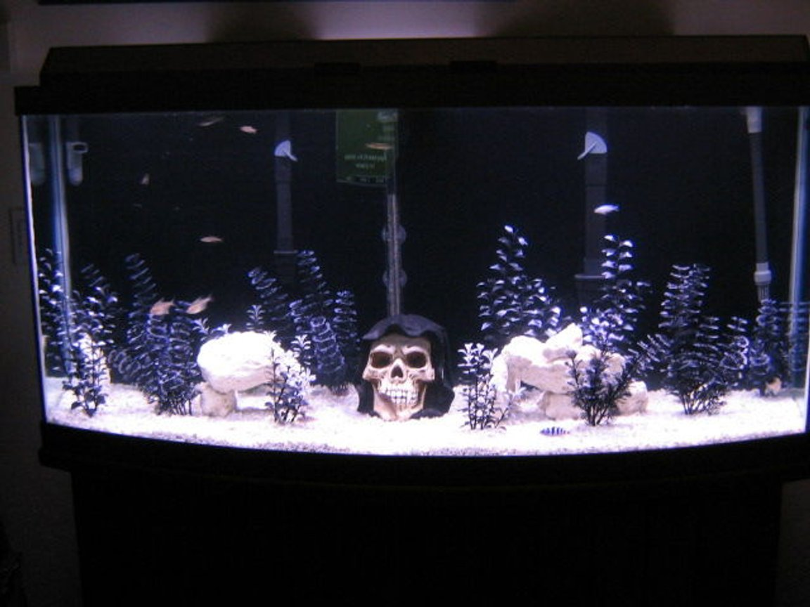 72 gallons freshwater fish tank (mostly fish and non-living decorations) - THis is my 72 gallon bowfront tank. This is all I have so far after running the tank for a month now. So far I have 6 african cichlids, 5 danios, and 3 bleeding heart tetras. I want more but what do I add with these cichlids?