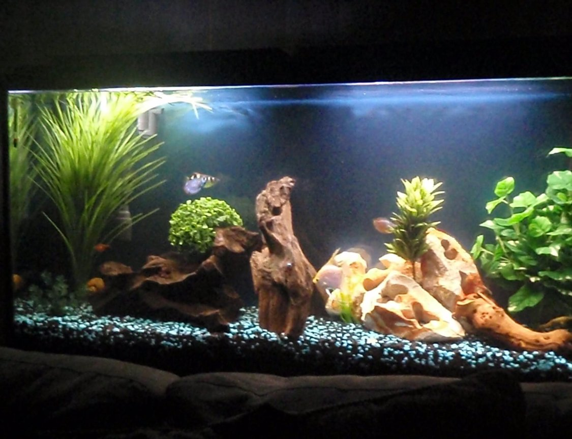 60 gallons freshwater fish tank (mostly fish and non-living decorations) - Front tank view.