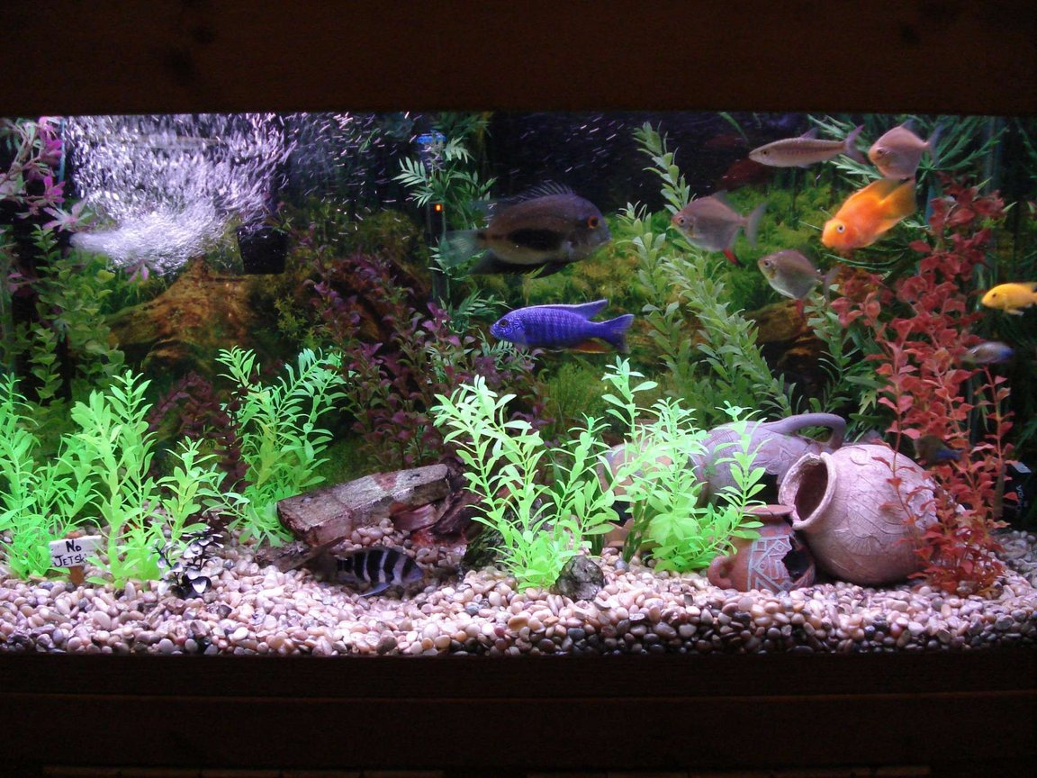 90 gallons freshwater fish tank (mostly fish and non-living decorations) - Here's a close up of the tank.