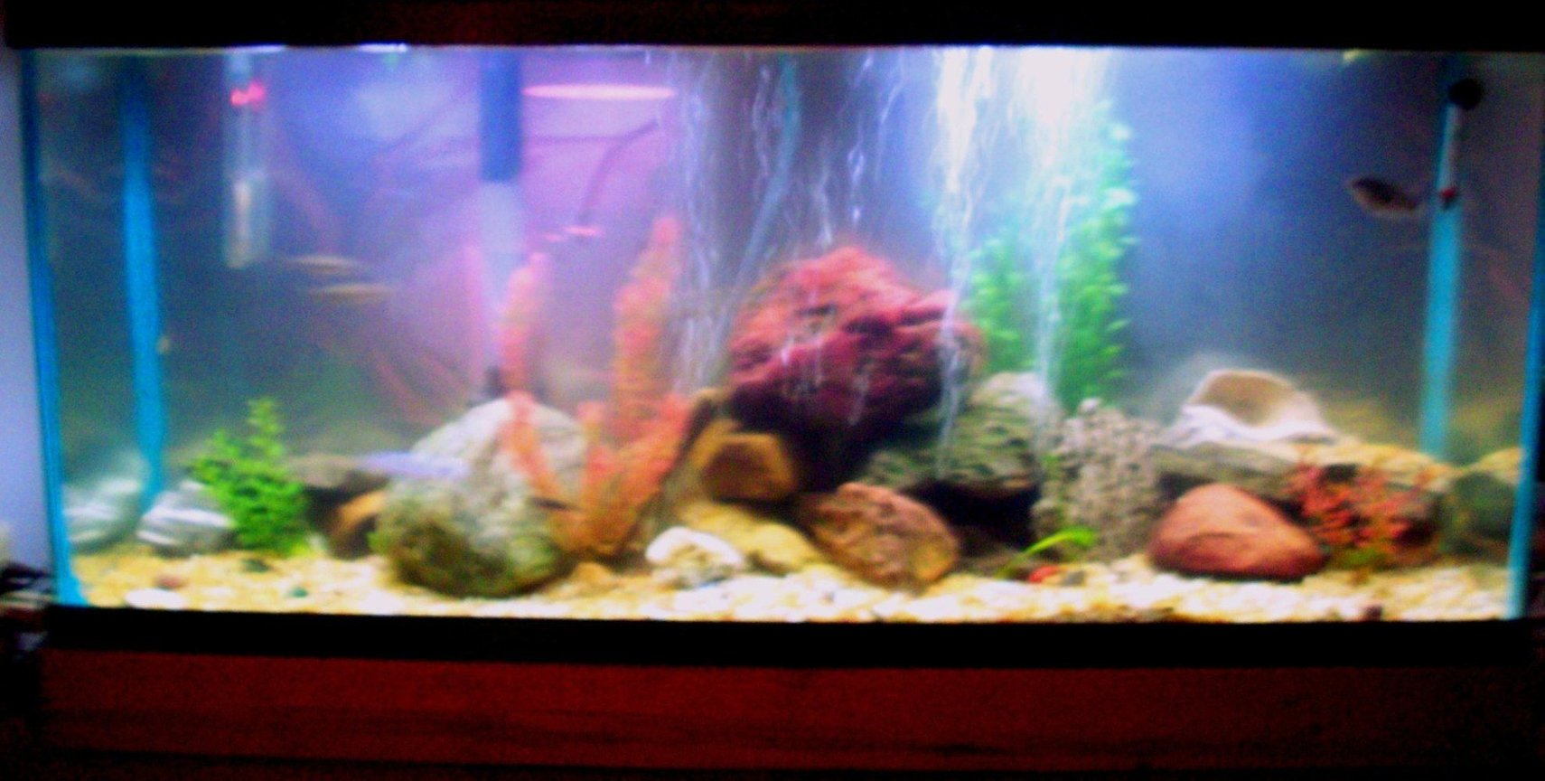 55 gallons freshwater fish tank (mostly fish and non-living decorations) - crappy camera
