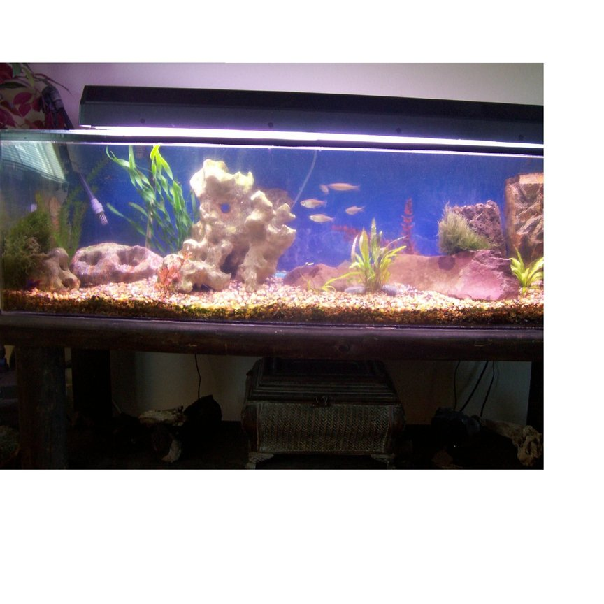 75 gallons freshwater fish tank (mostly fish and non-living decorations) - 75 gallon acrylic tank