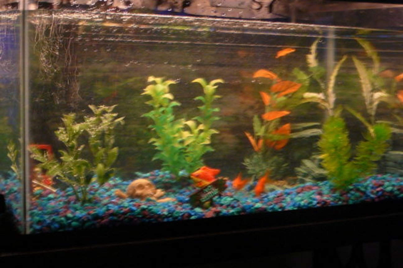 10 gallons freshwater fish tank (mostly fish and non-living decorations) - 10 gallon tank.