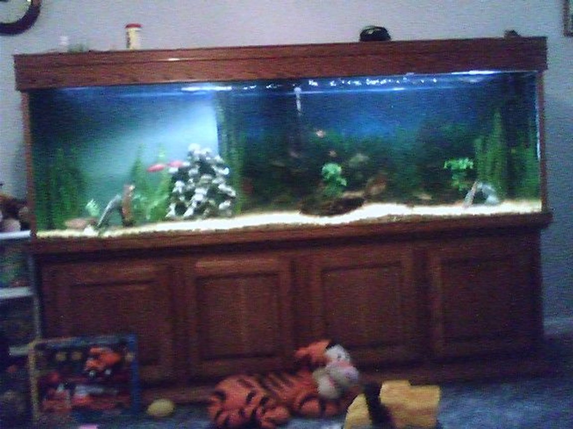 225 gallons freshwater fish tank (mostly fish and non-living decorations) - 220 gallon tank