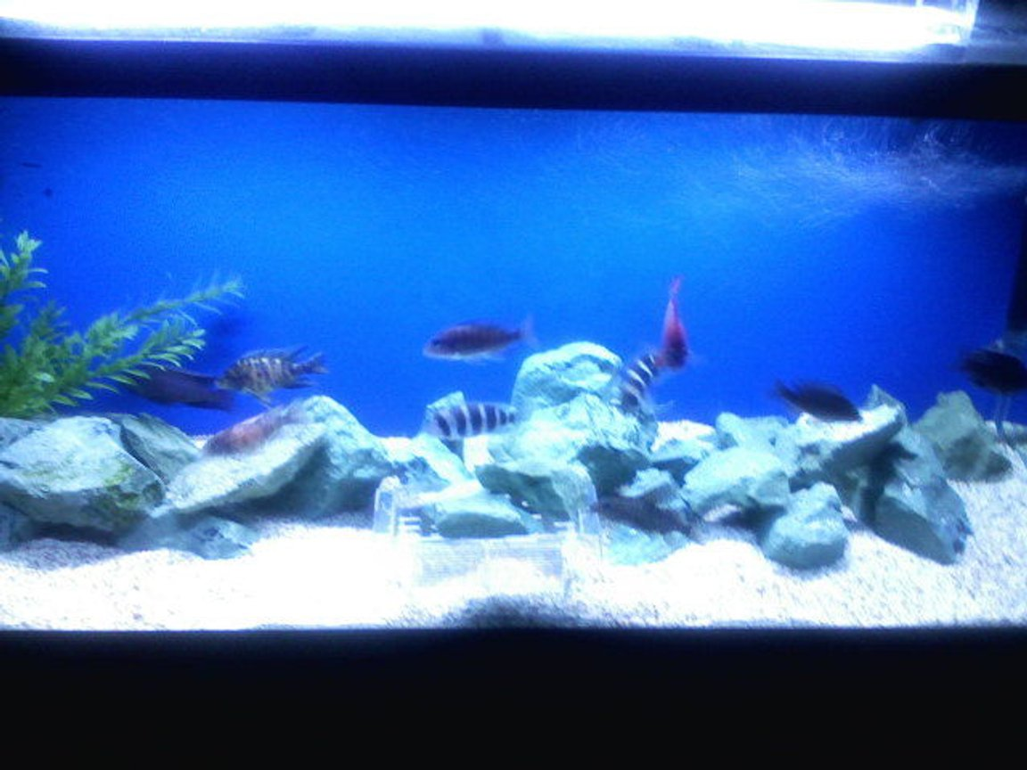 75 gallons freshwater fish tank (mostly fish and non-living decorations) - kinda blurry