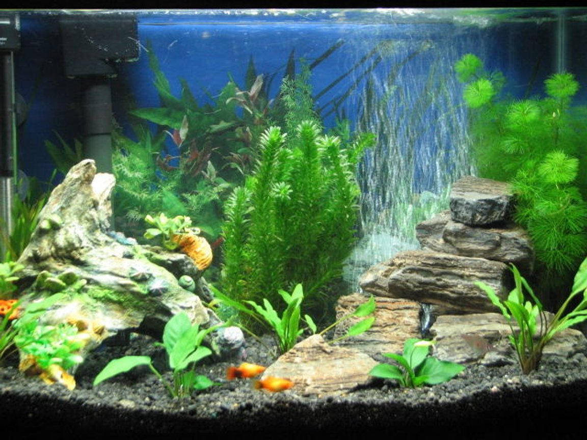 20 gallons freshwater fish tank (mostly fish and non-living decorations) - My 1st fish tank. 20 gallons with Marineland Eclispe II filtration/lightning system. 1st picture with only 4 fishes in it. (I need to update this picture 1 day, it's about 6 months old now)