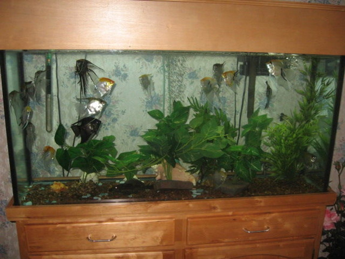 60 gallons freshwater fish tank (mostly fish and non-living decorations) - 60 g Natural oak set up,