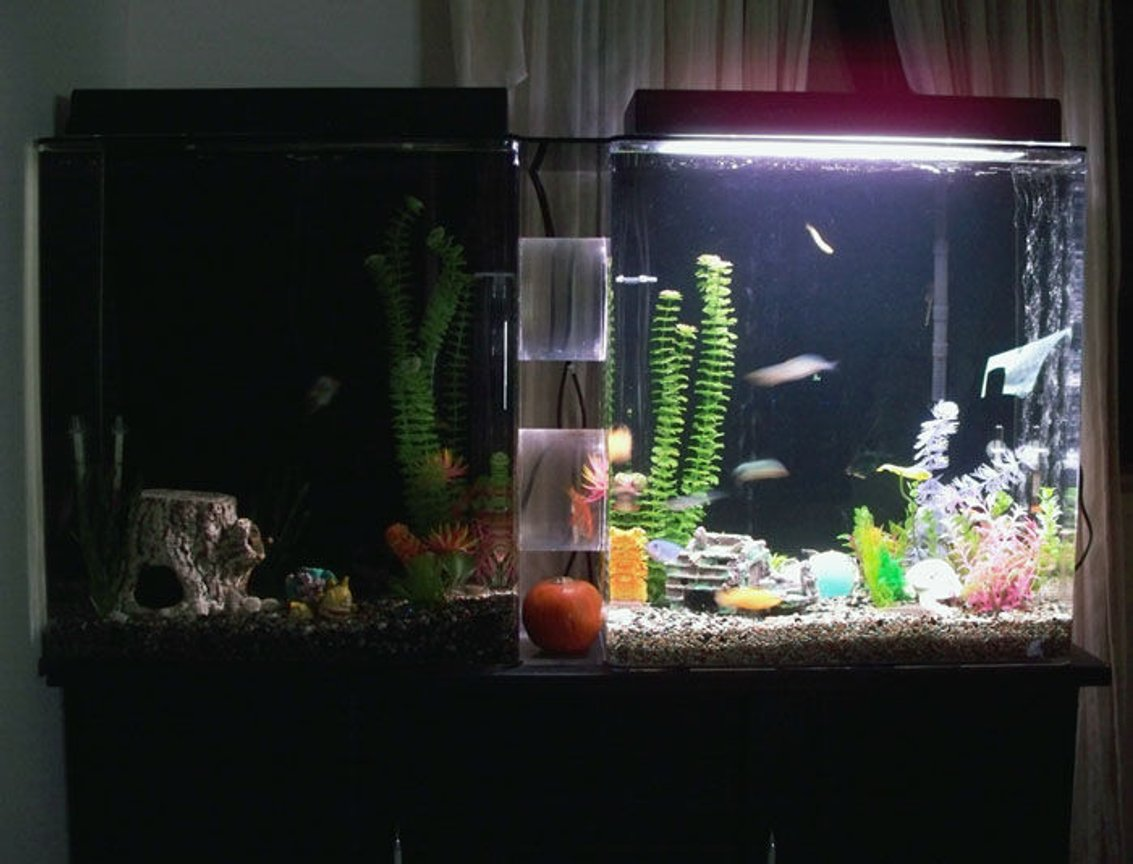 50 gallons freshwater fish tank (mostly fish and non-living decorations) - our current 50 gallon tank setup (more plants than usual on the right because our female yellow cichlid is carrying her spawn and could use the hiding space.) the left side is unlit because of our black ghost who didn't like the lighting on the other side.